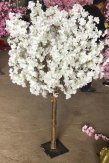 180CM White Cherry Blossom Tree Regular Range
